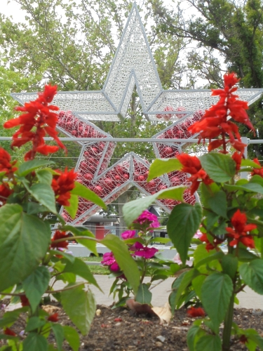 Shepparton's Christmas star in Queens Gardens framed by Salvia flowers