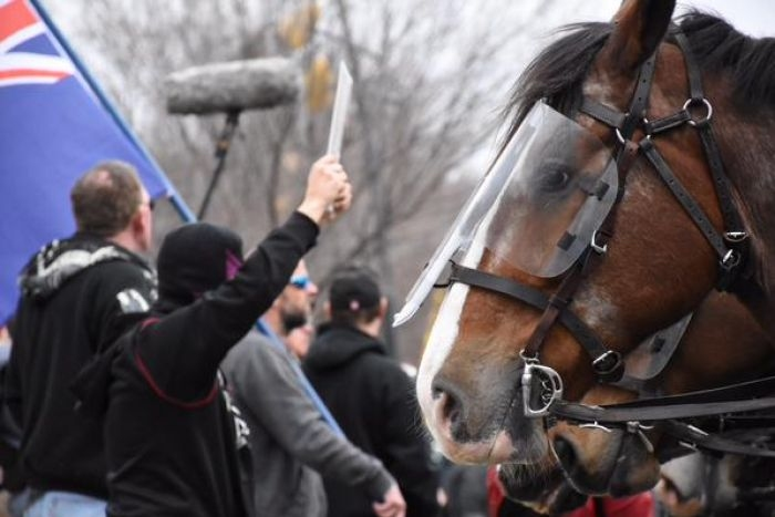 Police Horse at protest