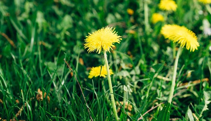 grateful for weeds